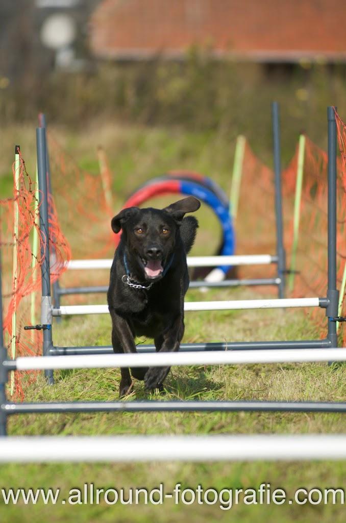 Huisdierreportage Hondendag Uden Dierendag (4 oktober 2008) - 13