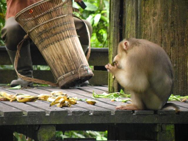 Sepilok Borneo Malaysia
