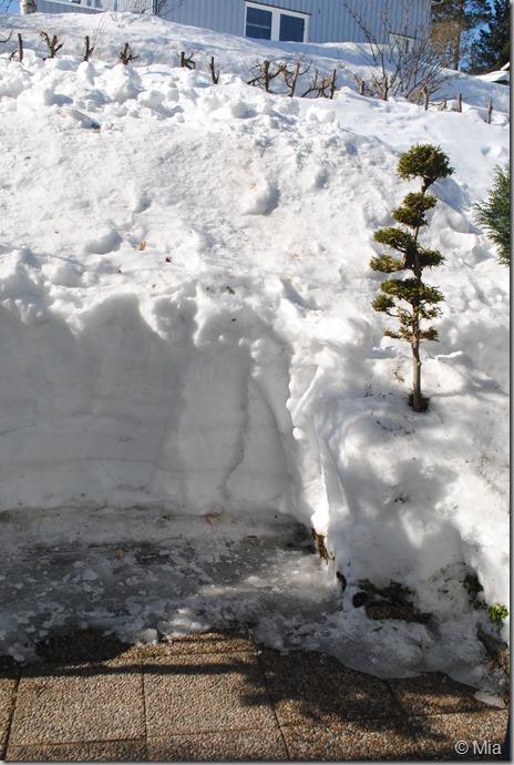 minst 3 meter hårdpackad snö!!