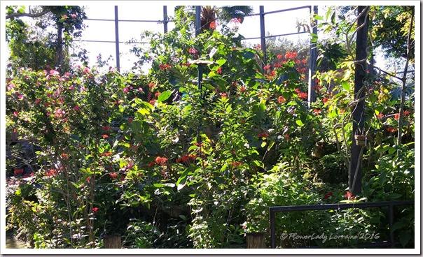 10-22-plants5