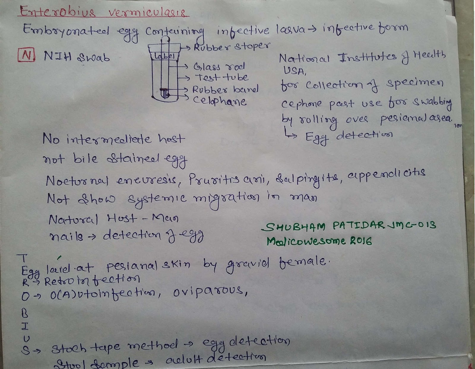 enterobius vermicularis nih swab