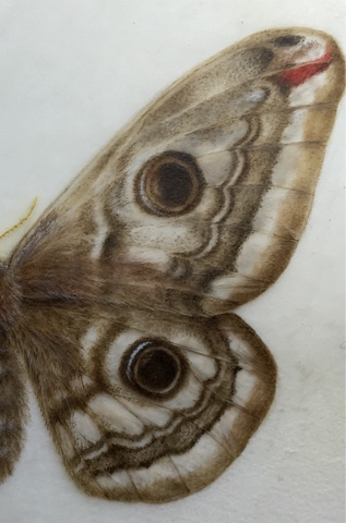 butterfly winf detail made using David Jackson spotter brush