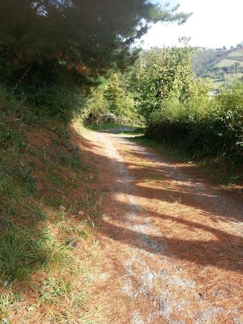 imagen otoñal de un camino