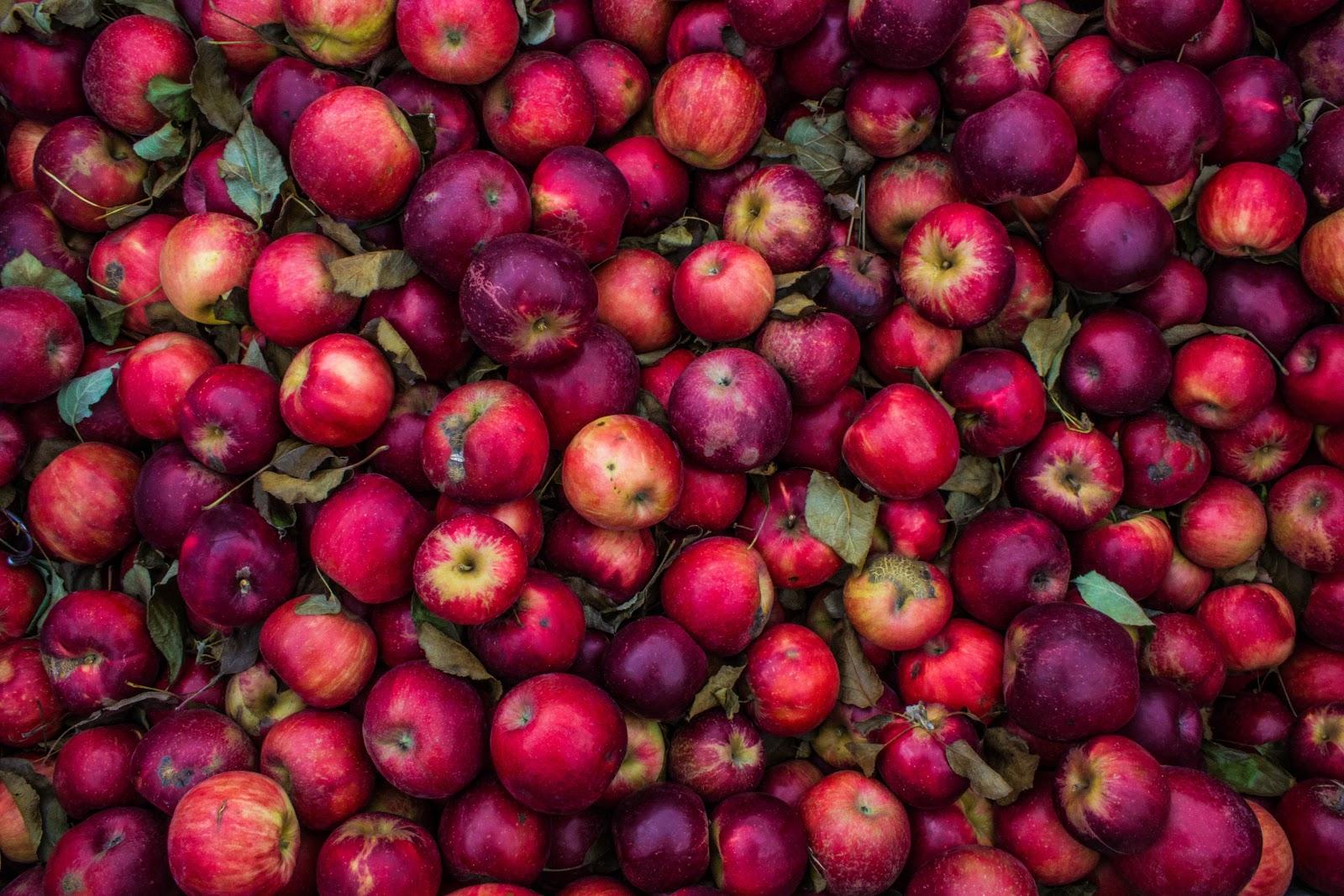 despulpadora de frutas