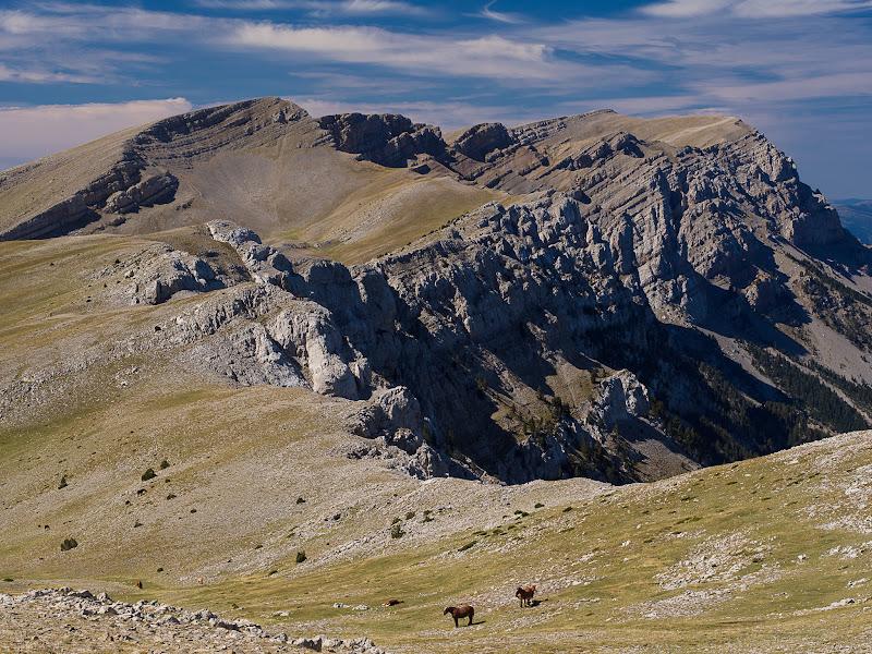 Cavalls pasturant davant les parets del Cadí