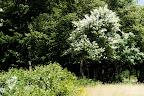 Trees n leaves n stuff