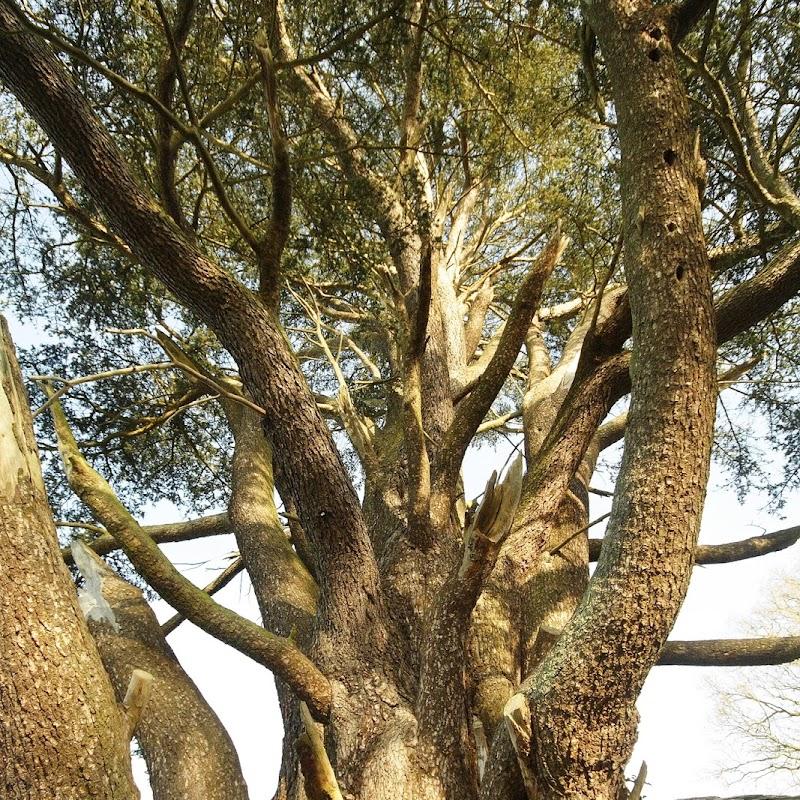 Stowe_Trees_34.JPG