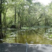 Seabase 2012 - 2012%7E07%7E25 8 Swamp 2.jpg