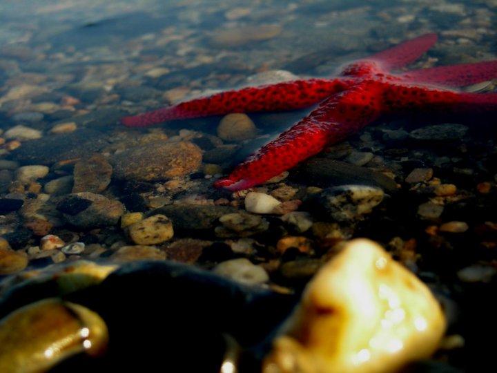 La stella del mare di fl photographer