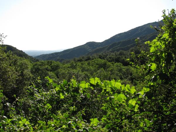 a green land