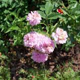 Gardening 2010, Part Two - 101_2606.JPG