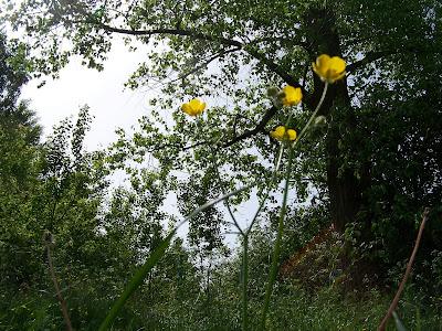 kwiatki ogród Panorama LeSage dzwoneczki tulipany wiśnia łubiny kaczeńce gruszki jabłka sad