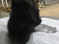 Inidia 5 Penyebab Mengapa Bulu Kucing Rontok Seketika