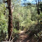 Walking along Patonga track (218876)