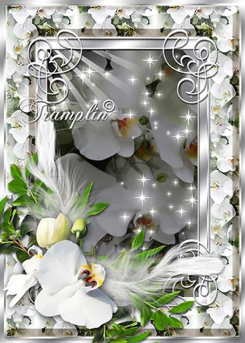 Рамка  для Photoshop – Нежная орхидея