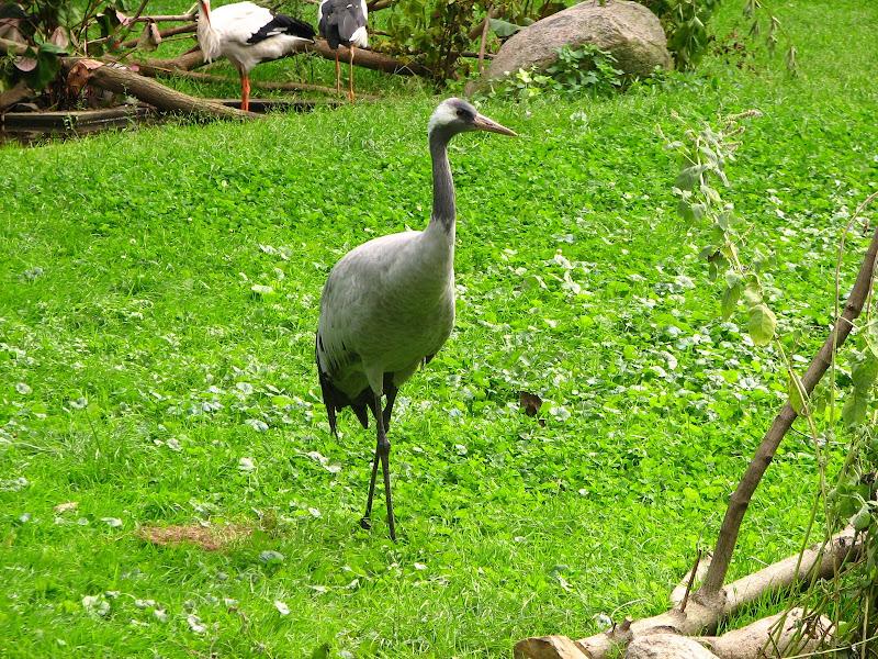 Warszawskie zoo - img_6386.jpg