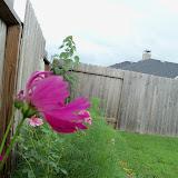 Gardening 2010, Part Three - 101_3577.JPG