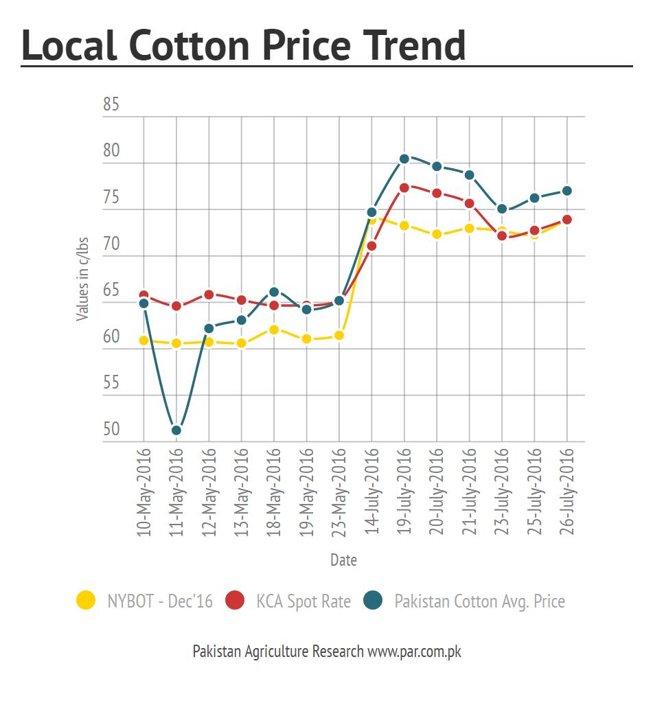 local cotton market prices