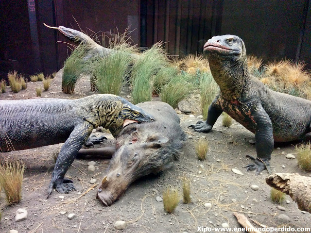 reptiles-dragones-museo-historia-natural-nueva-york.jpg