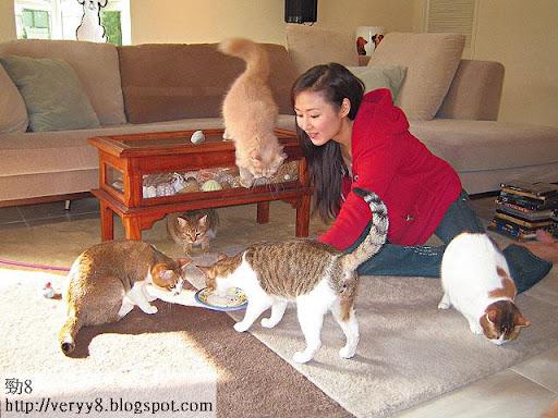 家中全盛時有八隻貓,現在也有六隻。老公名叫十三,貓的名字便由十四排起,十五、十六……