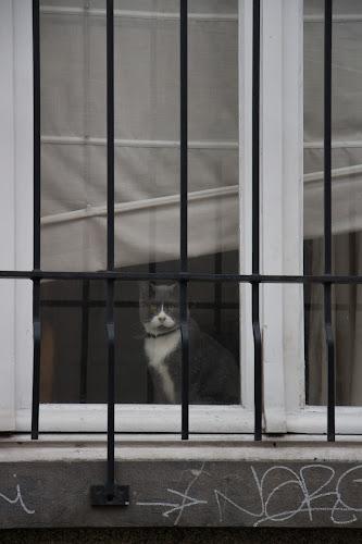 Cat, Brussels