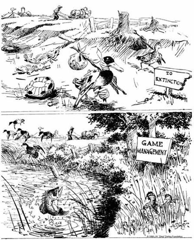 Cartoonist Ding Darling illustrated the need for scientific game management in the early decades of the 1900s. Graphic: Ding Darling Foundation