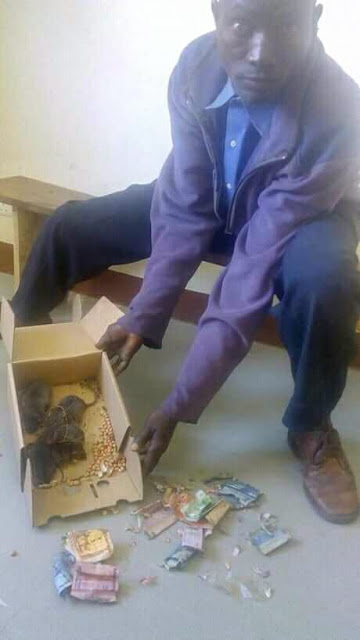 DRAMA as Man drags 5 rats to police station for eating his money