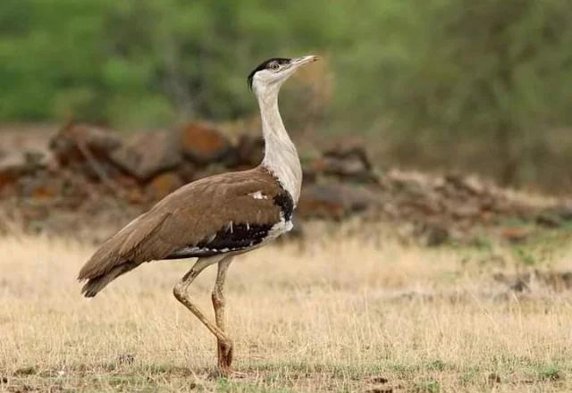 Best place in Jaisalmer to see wildlife - desert National park Jaisalmer