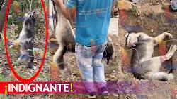 VIDEO: Indignación por cruel asesinato de perro Neiva