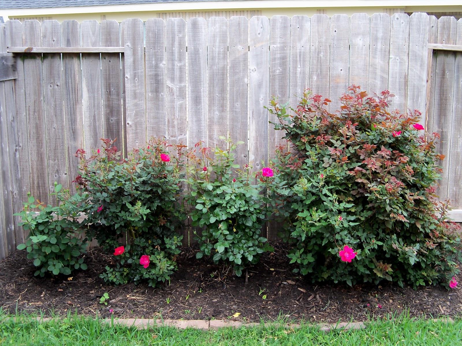 Gardening 2011 - 100_7185.JPG
