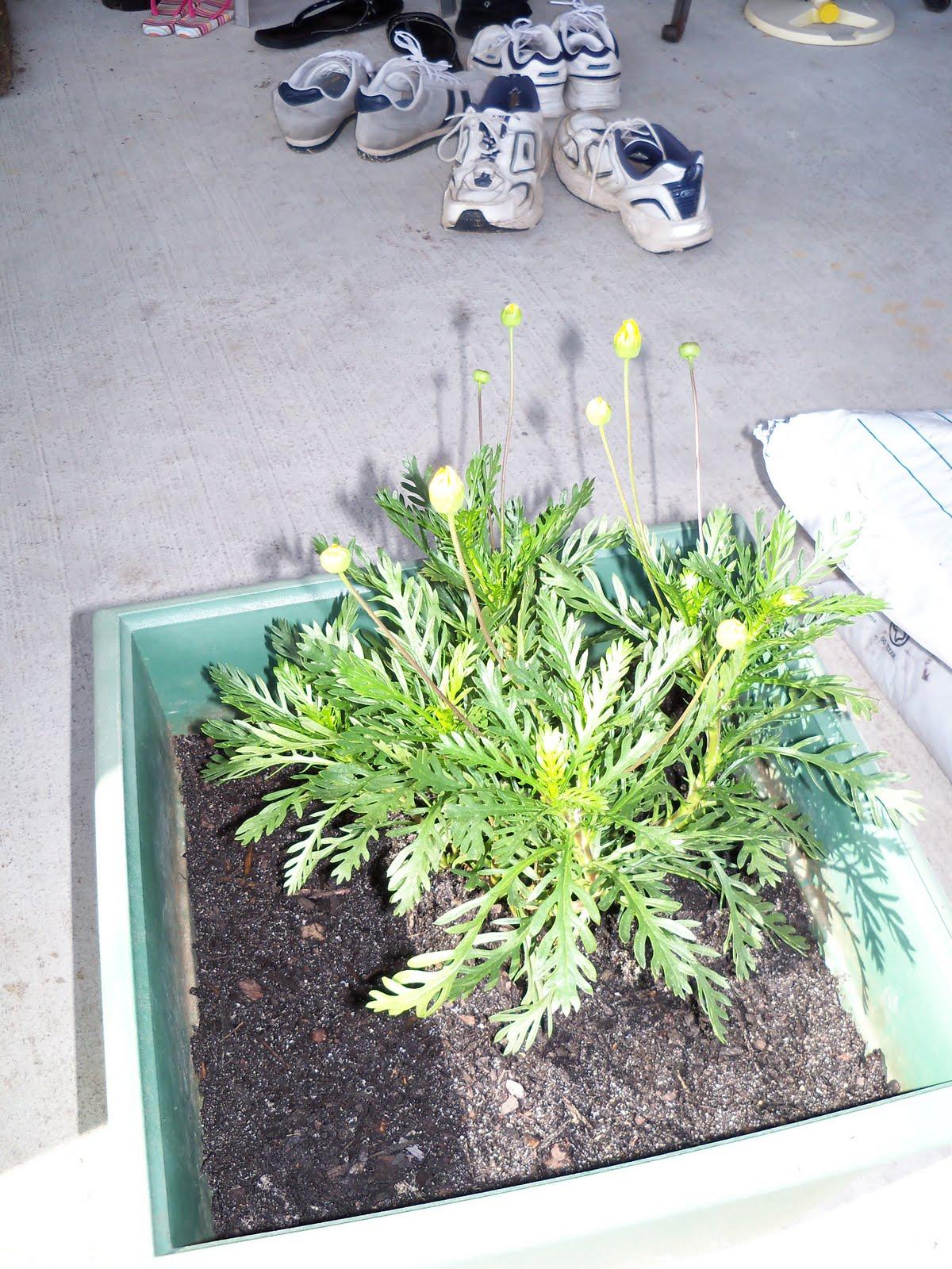 Gardening 2010 - 101_0248.JPG