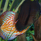Downtown Aquarium - 116_3911.JPG