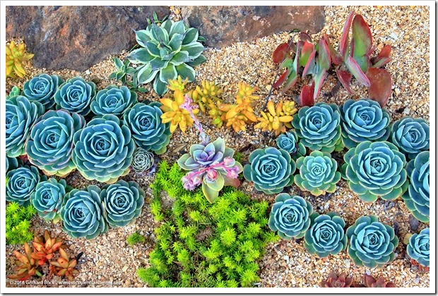 Wednesday Vignette: succulent tapestry