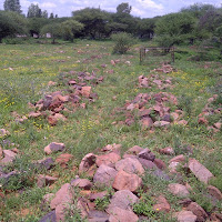 Graveyard in Mochudi, few headstones, just rocks to mark the grave