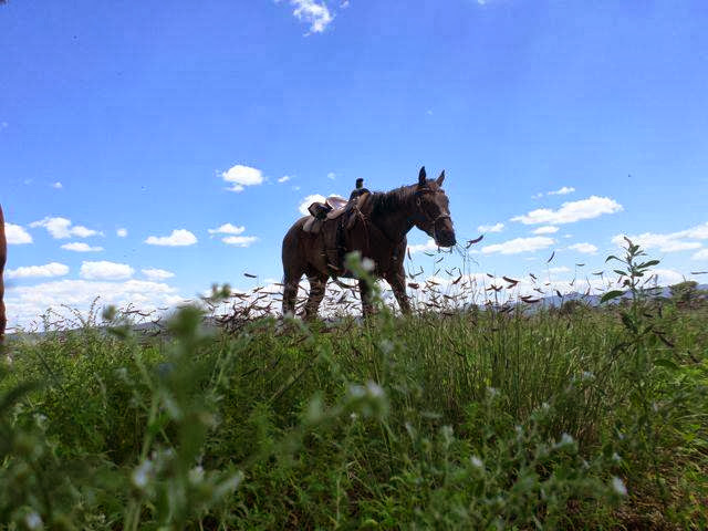 Gaucho lovin