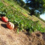 Blessington Farms - 116_4983.JPG