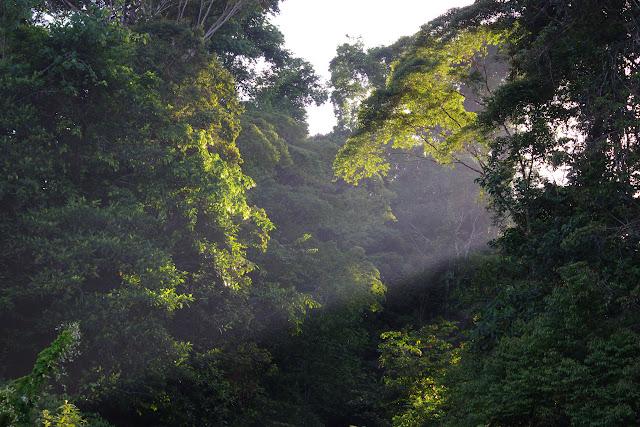 Début de matinée. Carbets de Coralie (Crique Yaoni), 30 octobre 2012. Photo : J.-M. Gayman