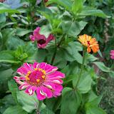 Gardening 2011 - 100_8213.JPG