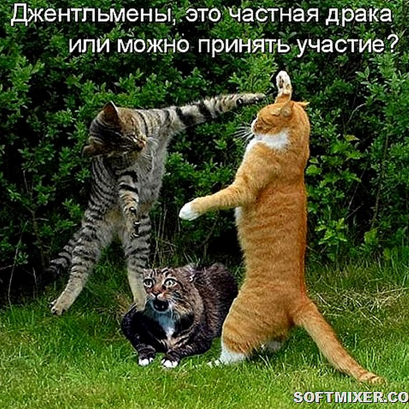 Котодром (30.06.18)