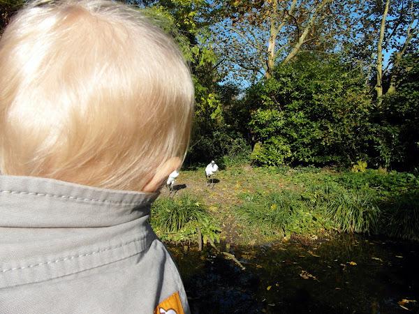 Eon ziet loopvogels