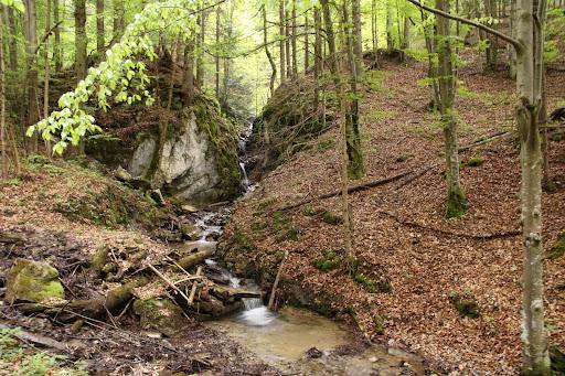 Potok nad Havranovom