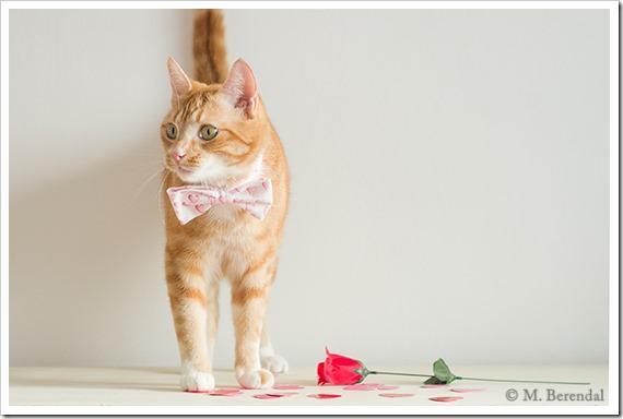 Teddy_Valentine_2_10