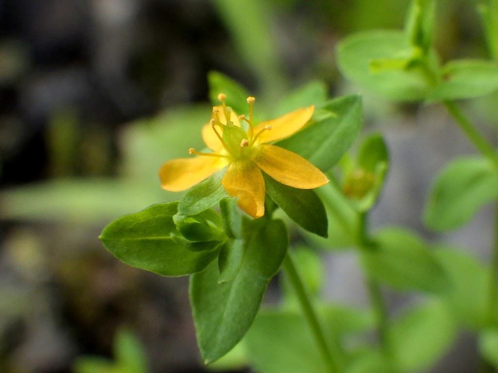 花の写真4