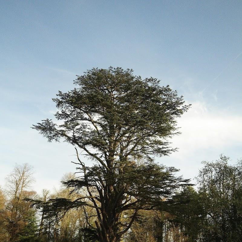 Stowe_Trees_33.JPG