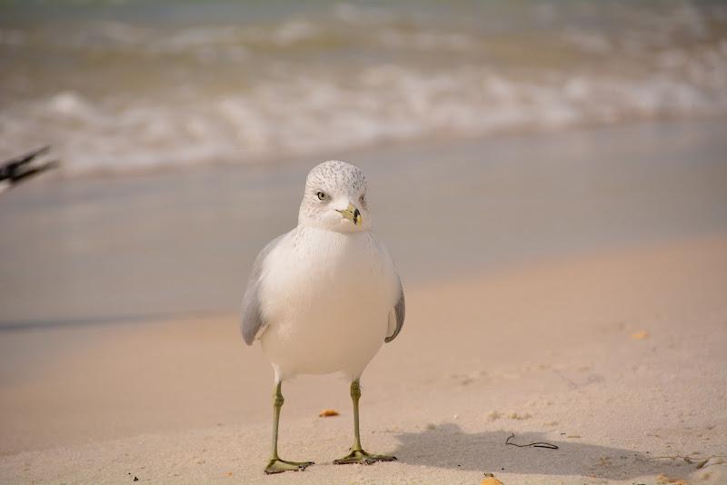 Tidewater Beach Resort - Cuties