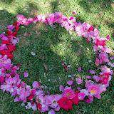 Gardening 2014 - 116_1540.JPG
