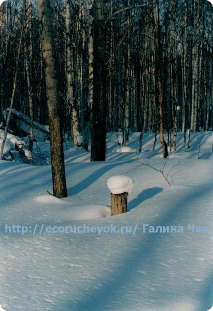 портрет зимы