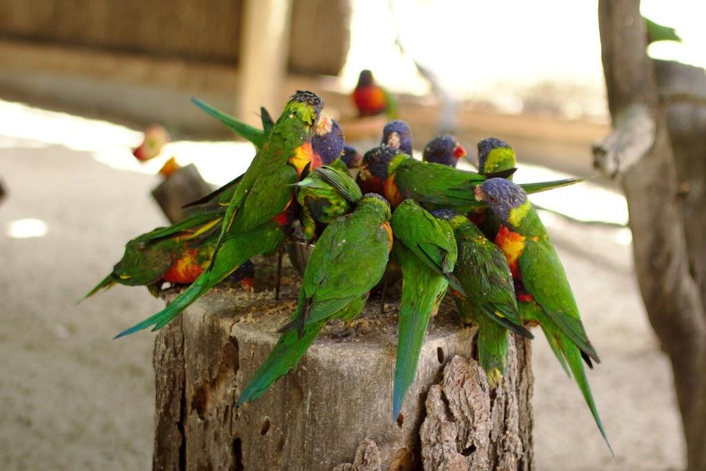 Głodne i głośne papugi