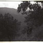 n029-031-1966-tabor-sikfokut.jpg