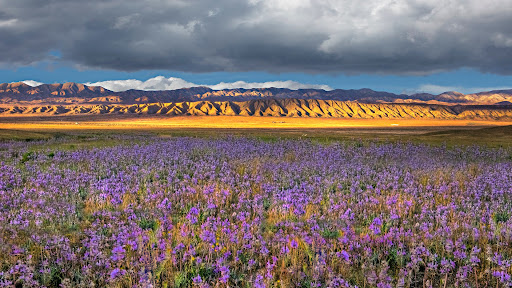 Spring Color, Carrizo Plain National Monument, California.jpg